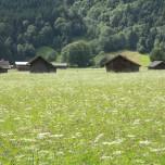 Heuhütten & Wiese