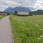 Wanderweg über eine weißblühende Wiese