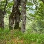 Im Wald I