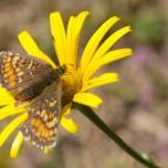 Gelbe Blüte mit Schmetterling