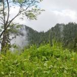 Grün in den Alpen