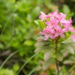 Blüten am Wegesrand V