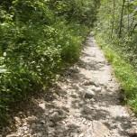Wanderweg durch Wald