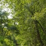 Schwarzerlenwälder
