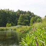 Feuchtwiese am Rhin I