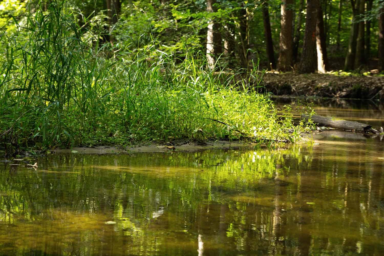 Flacher Fluss mit scharfer Kurve