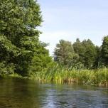 Feuchtwiese am Rhin
