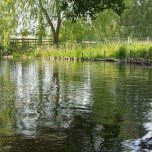 Feuchtwiesen am Rhin