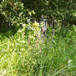 Blüten am Ufer des Rhins
