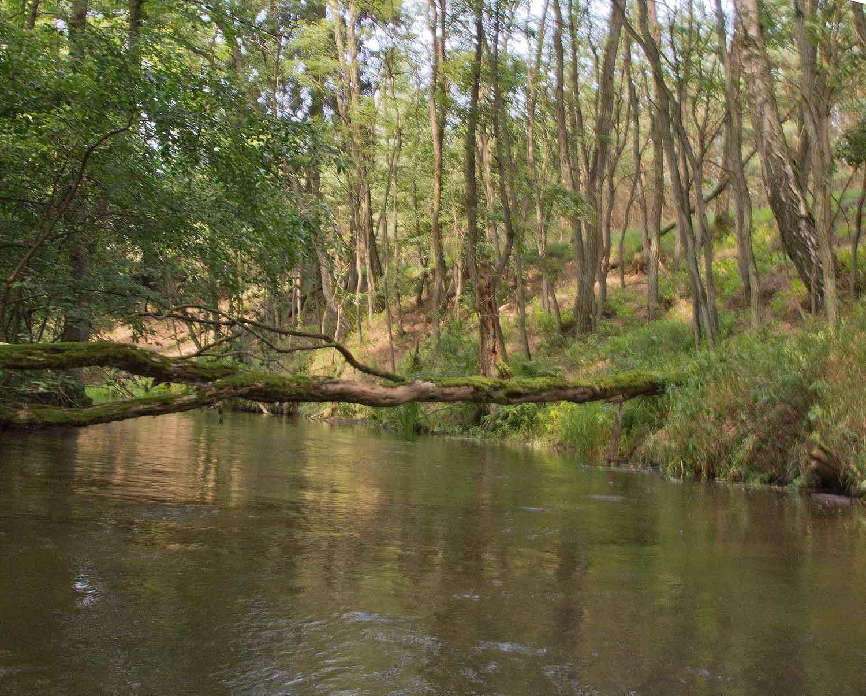 Baumstamm quer über den Rhin