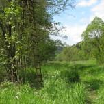 Über Feld und Wiese bei Rappelsdorf