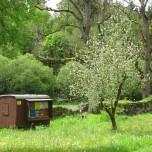 Bienenwagen Kloster Veßra