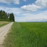 Wanderweg zwischen Rohr und Meiningen