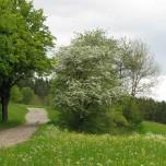Wanderweg bei Kloster Veßra