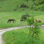 Pferde am Wanderweg bei Henfstädt
