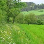 Wanderweg bei Vachdorf