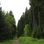 Wanderweg bei Stützerbach