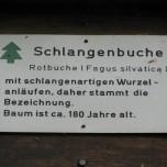 Hinweisschild Schlangenbuche in Sitzendorf