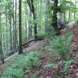 Am Wanderweg bei Sitzendorf