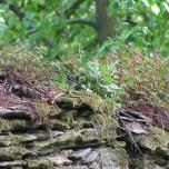 Alte Mauer Fasanerie bei Sitzendorf