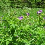 Blumen im Vessertal