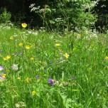 Blumenwiese Vessertal