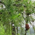 Detail Baum