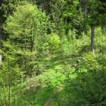 Maigrün Goethewanderweg