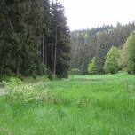 Am Wanderweg Goethewanderweg