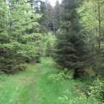Wanderweg Goethewanderweg