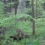 Finsteres Loch Goethewanderweg