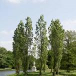 Rousseau-Insel im Wörlitzer Park