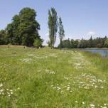 Wiese am Wörlitzer See
