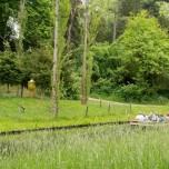 Kahnpartie im Wörlitzer Park