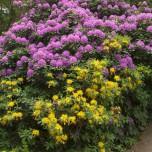 Blütenpracht im Wörlitzer Park