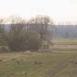Landschaftswiesen mit Großtrappen