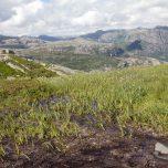 Landschaft am Kjerag