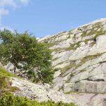 Einsamer Baum auf dem Kjerag