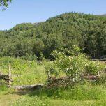 Garten im prähistorischen Dorf in Landa Park