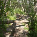 Kleines Hindernis - Baum über dem Weg