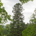 Schöner Baum in der Baronie Rosendal
