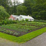 Gemüsebeet Baronie Rosendal