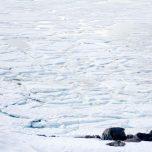 Eisschollen Ausdalsbreen