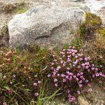 Farbtupfer Hardangervidda
