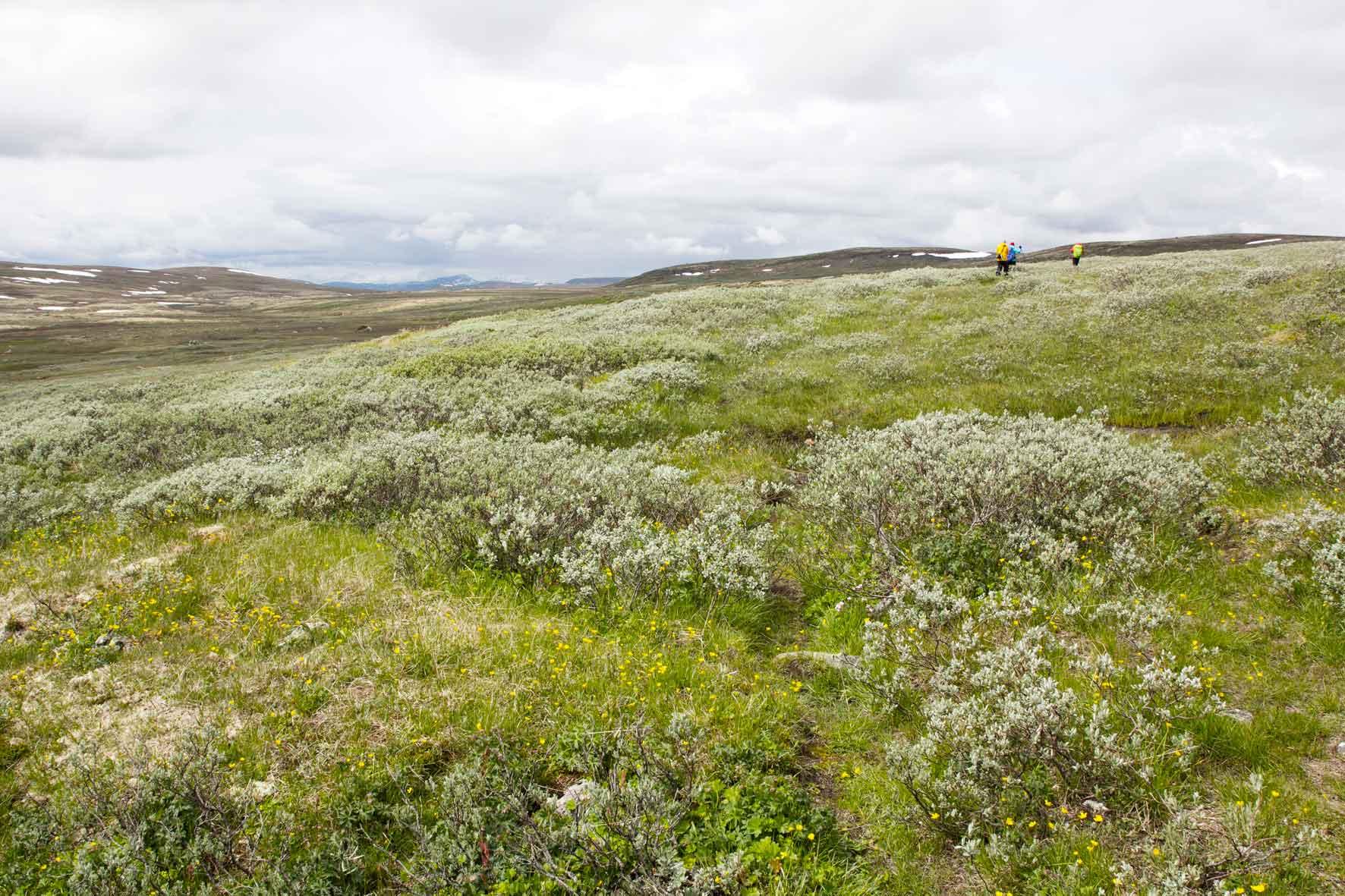 Wanderung über die Hardangervidda