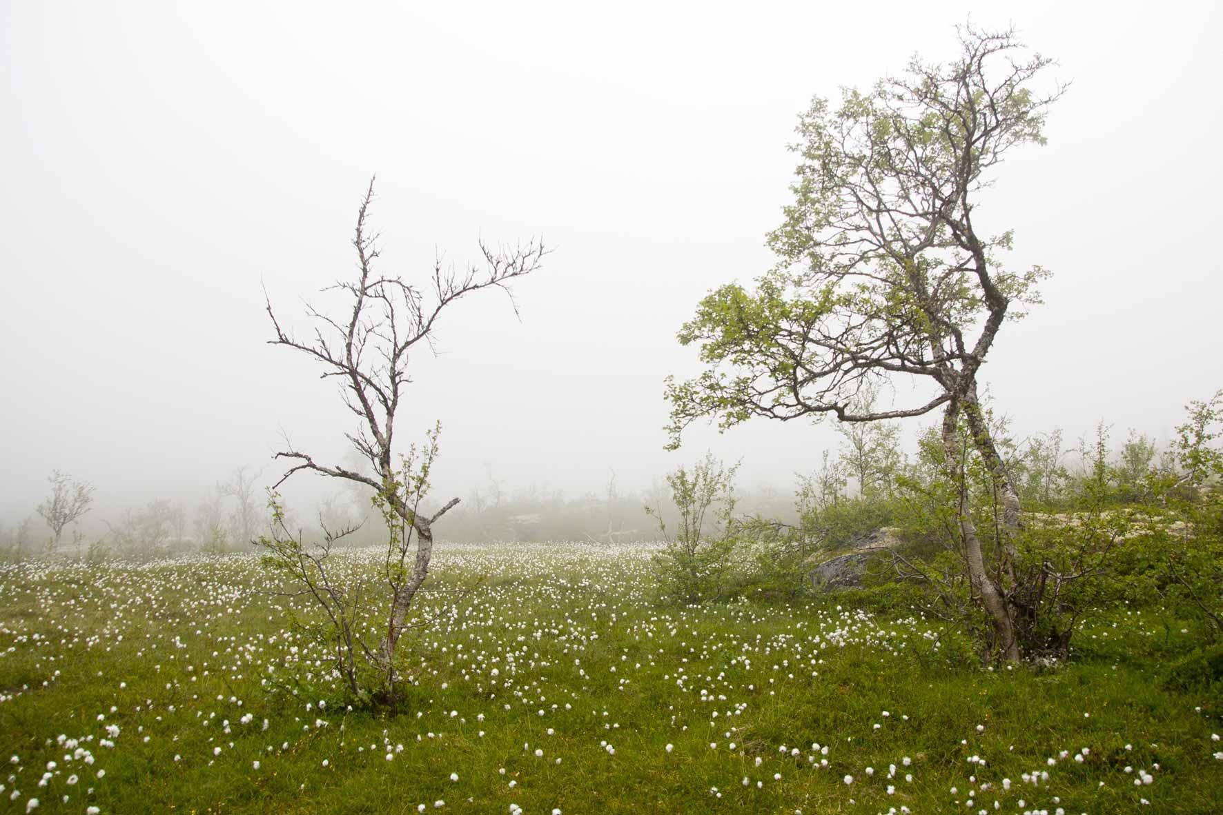 Auf der Hardangervidda in den Wolken