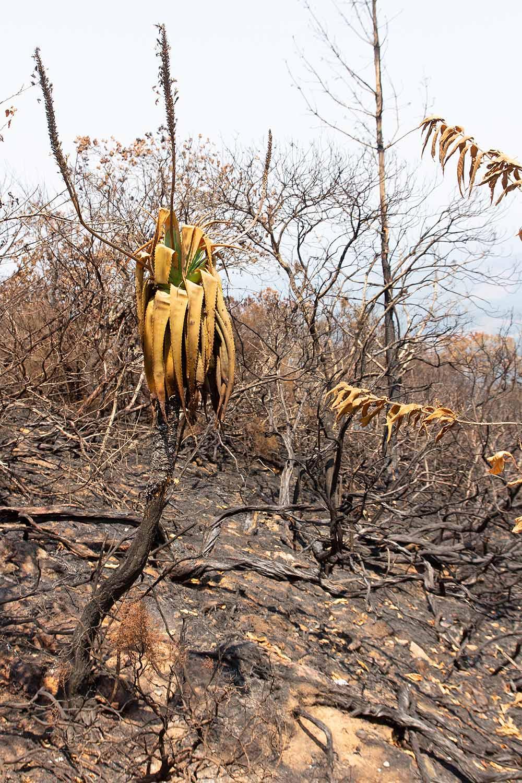 Verbrannter Regenwald