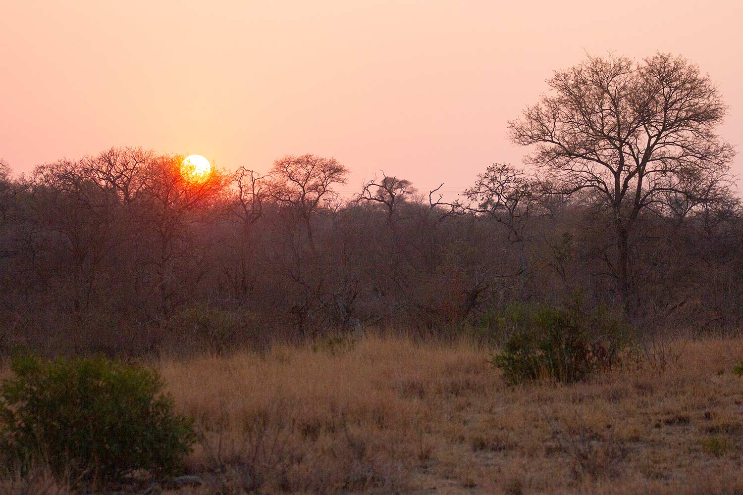 Sonnenaufgang, Savanne, Balule Game Reserve, Greenfire Game Lodge