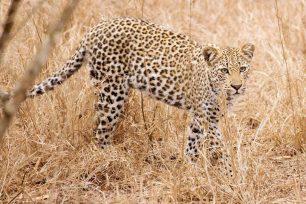 Kruger-National-Park-07